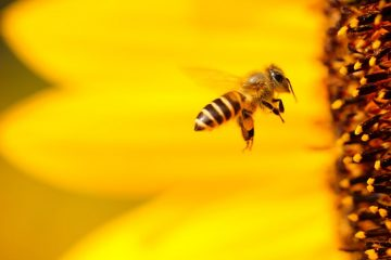 Guerlain and Unesco team up to protect bees