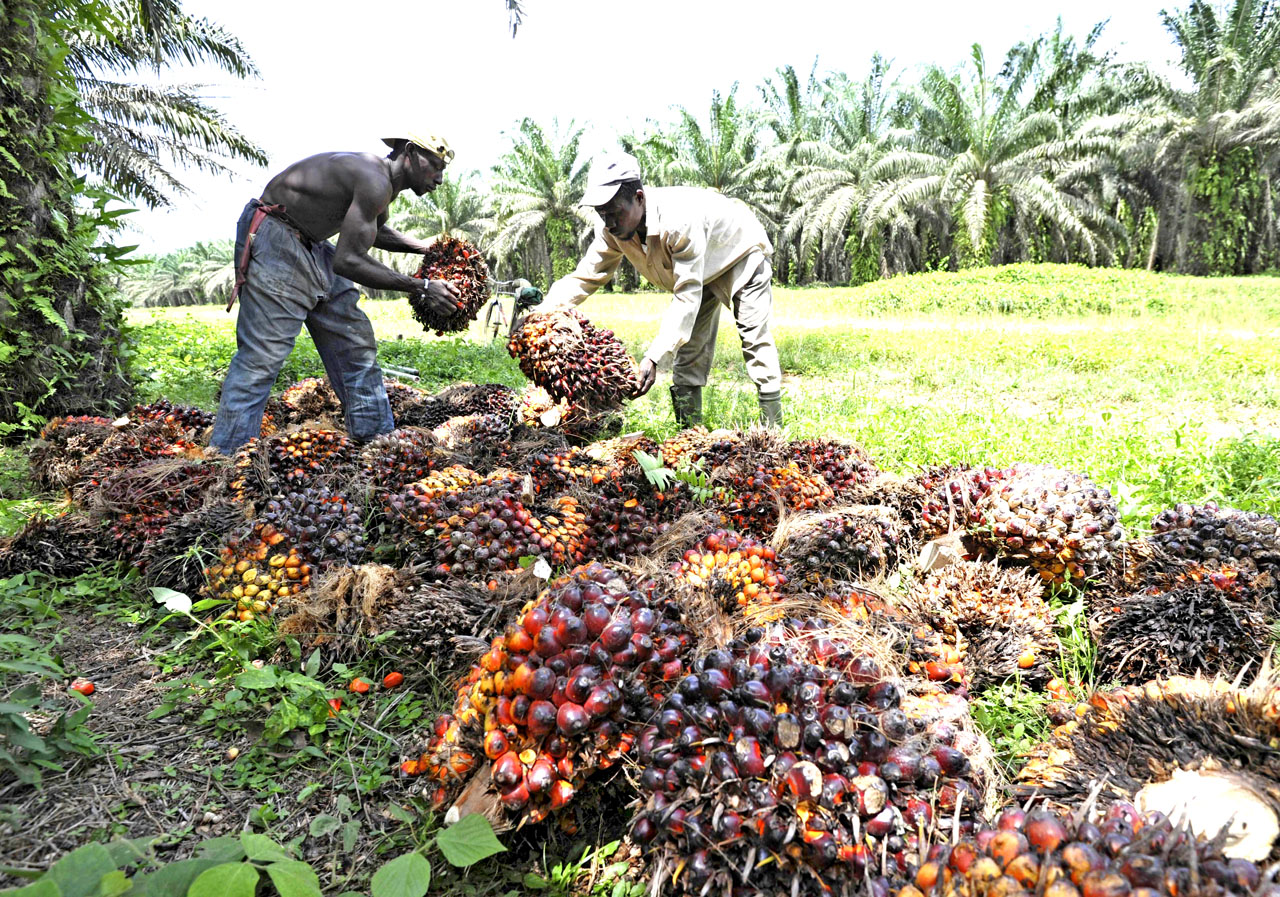 Licenses to be revoked if oil palm landowners fail to get MSPO cert next year