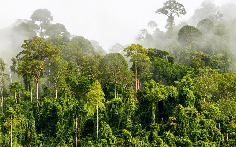 Sarawak explores carbon credit trading from its forests as new source of revenue