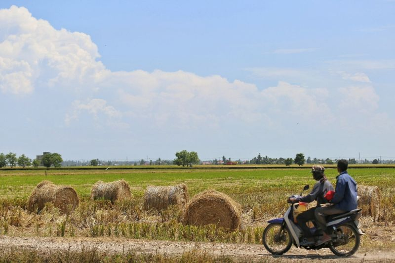 World Bank: Malaysia's agricultural productivity less than half that of high-income countries