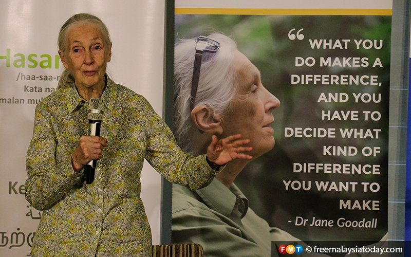 Stop destroying old forests, urges top primate expert Jane Goodall