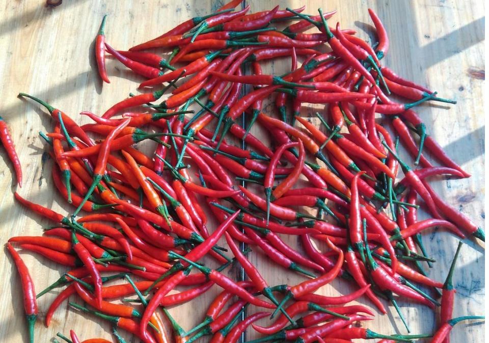 蒜蓉辣椒的正确制作方法,两小时能做好,开胃又下饭,简单易学!