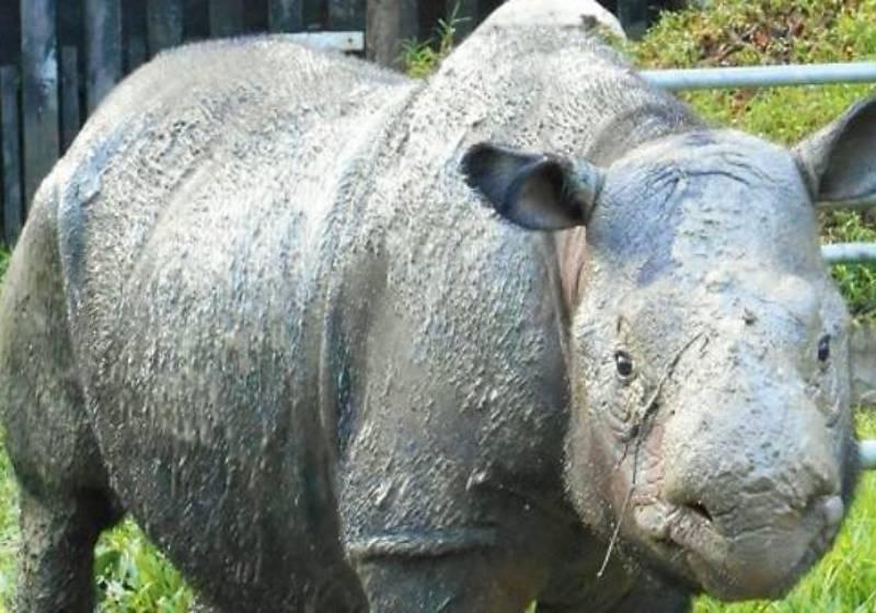 WWF: Sumatran rhino Iman's death a desperate wake-up call to all