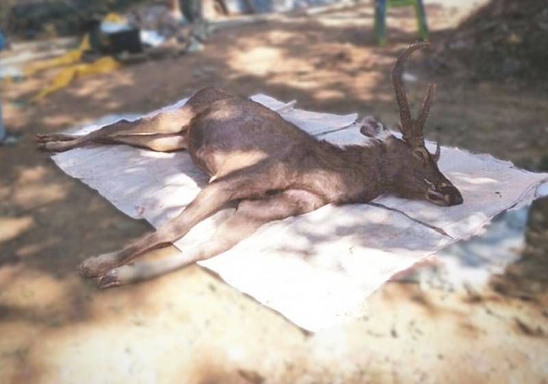 Dead deer in Thai national park found with 7kg of plastic in stomach