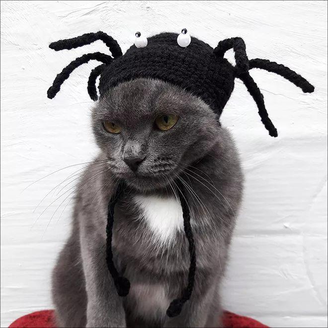 戴着针织毛线帽的可爱萌宠们