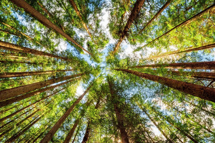 National Forestry Act to be amended to increase enforcement