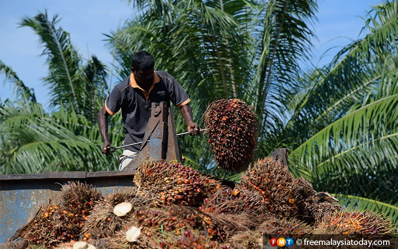 Local industry nothing like the Wild West, says palm oil board