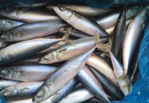 """史上公认最难吃的9类鱼,你若是全都吃过,请收下我的""""膝盖"""""""
