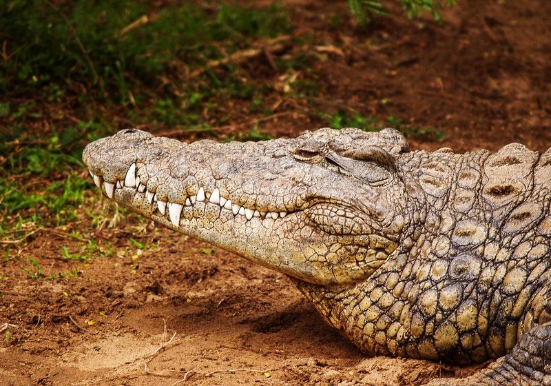 Indonesian fisherman's body found cut in half in possible crocodile attack