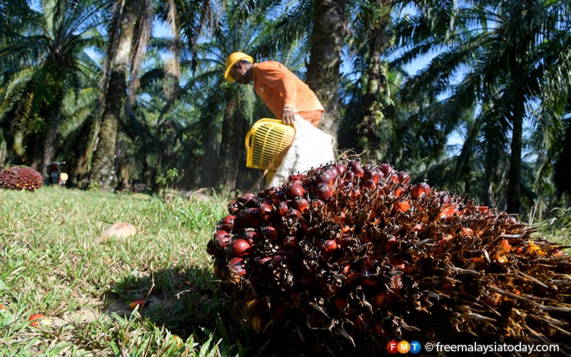 Soaring palm oil price sees India switching to sunflower oil