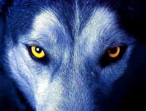 成大事的男人,在人生低谷时,往往有三种狼性思维,注定是人上人