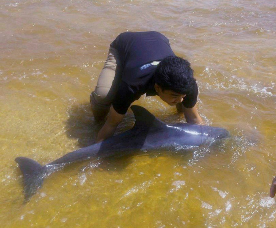 UMT students rescue dolphin beached at Kuala Nerus beach