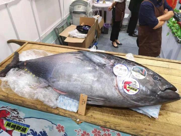 世界上最贵的鱼,日本拍出3亿一条的天价,却被日本人快要吃绝了