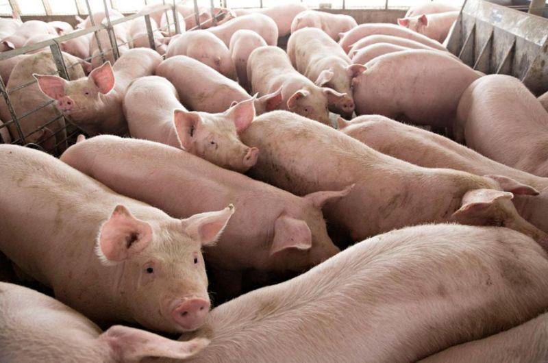 Malaysia bans Indonesian pork products as ASF precaution
