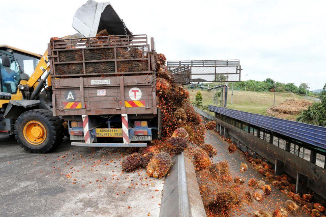 Malaysia to publish oil-palm concession maps in traceability bid