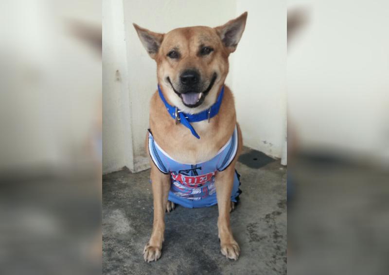 Malaysian canine social media sensation Danny Baboo dies