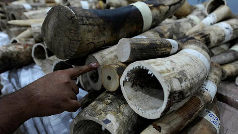 Police to probe elephant tusks smuggling claim