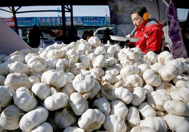 Thai garlic farmers suffer as cheaper Chinese bulbs flood the market
