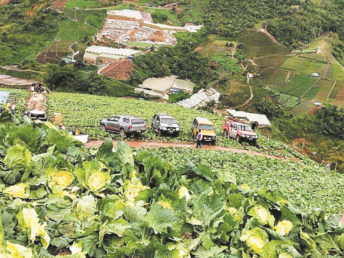 百执法人员摧毁金马仑6英亩菜园