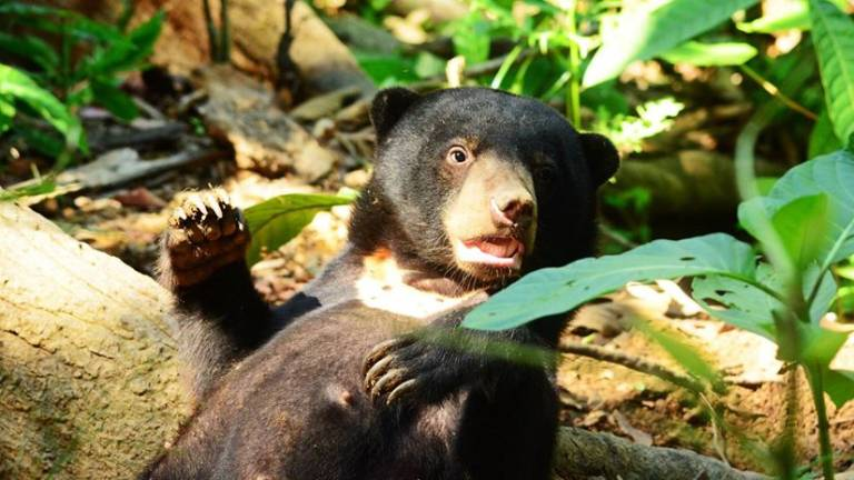 Orang Asli fights off bear in forest