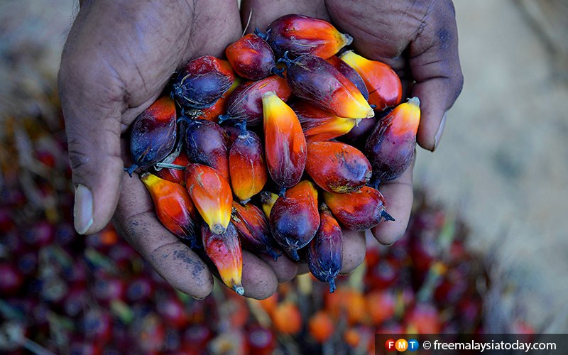 India bans import of refined palm oil