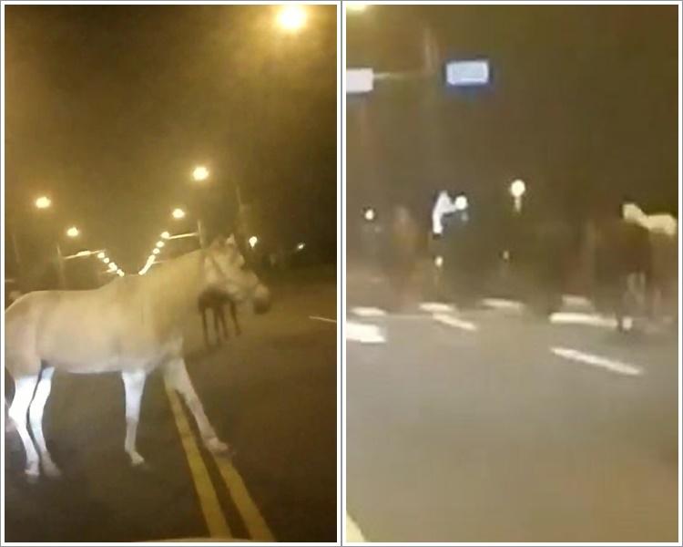 7马匹偷走台南街头踱步 拒捕飞奔逾时速40公里