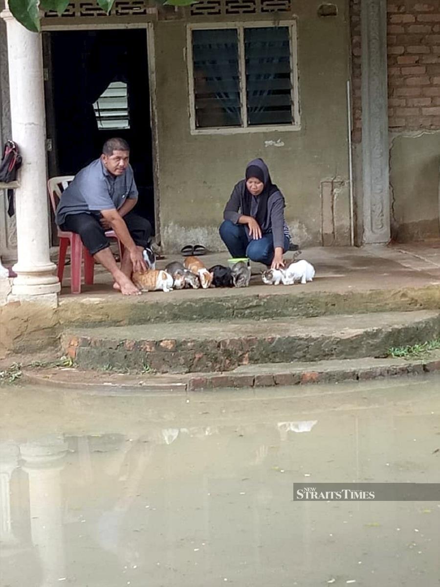 35 cats find refuge in Johor flood victim's home