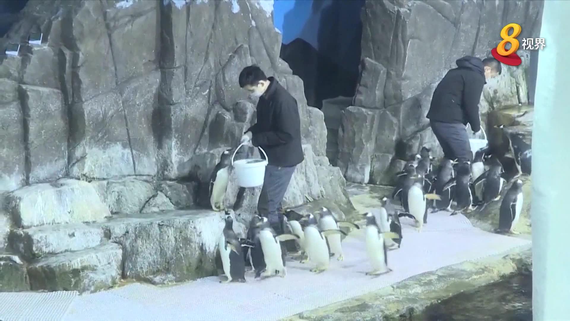 中国花五年攻克难题 孵化两只巴布亚企鹅