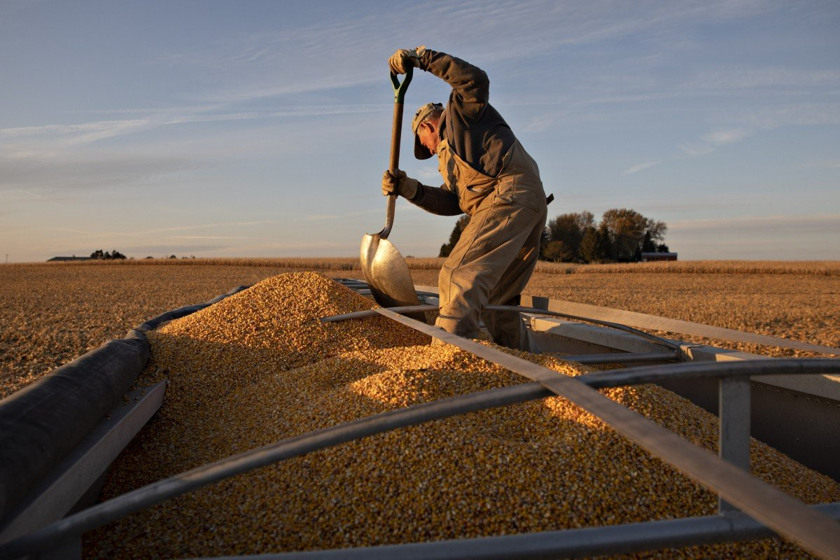 US farmers could be big winners if China buys up wheat quota