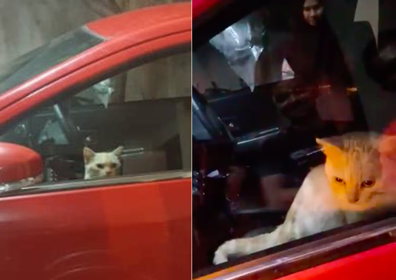 No joke: Cat trapped in car turns hazard lights on for help