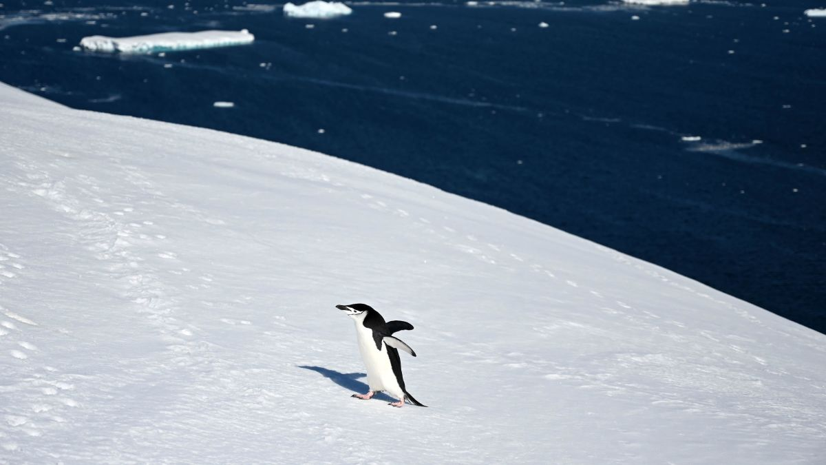 Antarctic Ice Melt May Have Hit an All-Time High on Christmas Eve