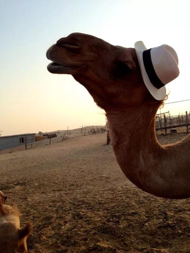 头戴帽子的可爱动物们