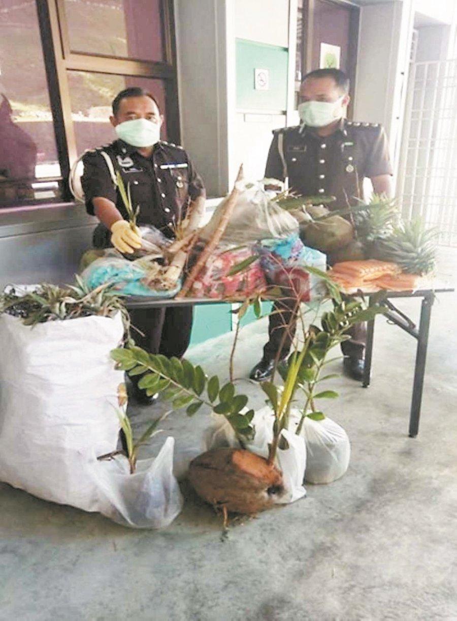 携树苗花卉入境违法