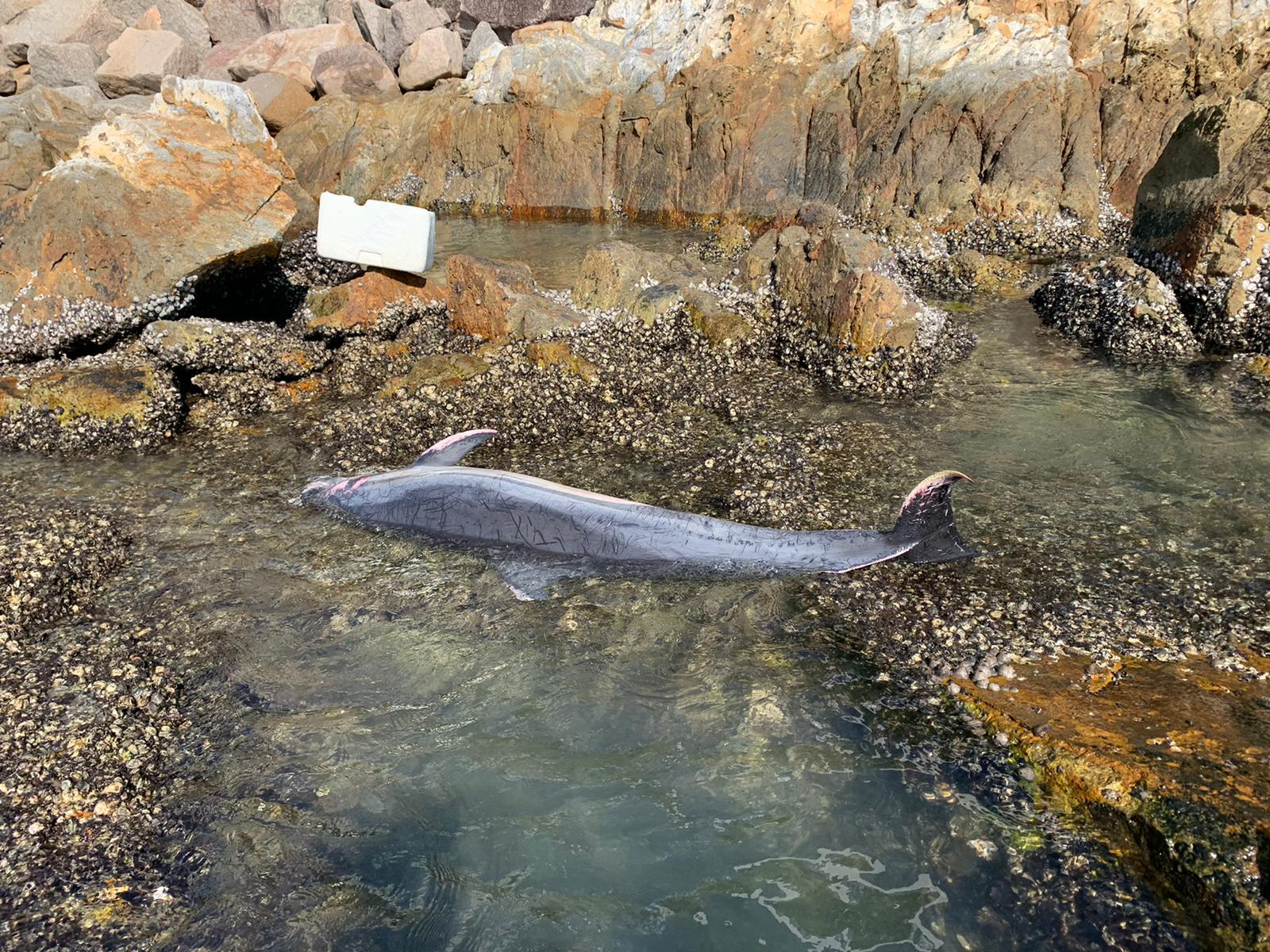 西贡深水湾发现3海豚搁浅 死因有待确定