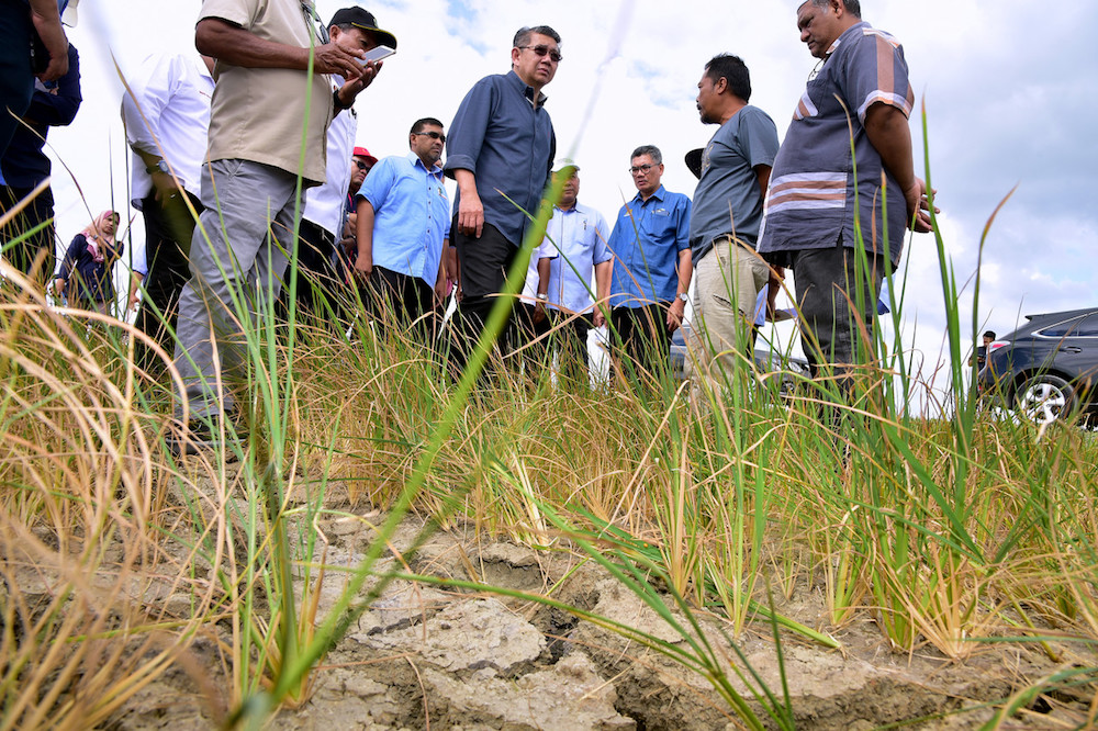 Salahuddin: Agriculture Ministry to fast-track aid to drought-hit paddy farmers in Perlis, Kedah