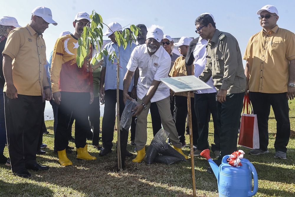 Minister says over 270,000 trees planted nationwide in past year after jungles cleared