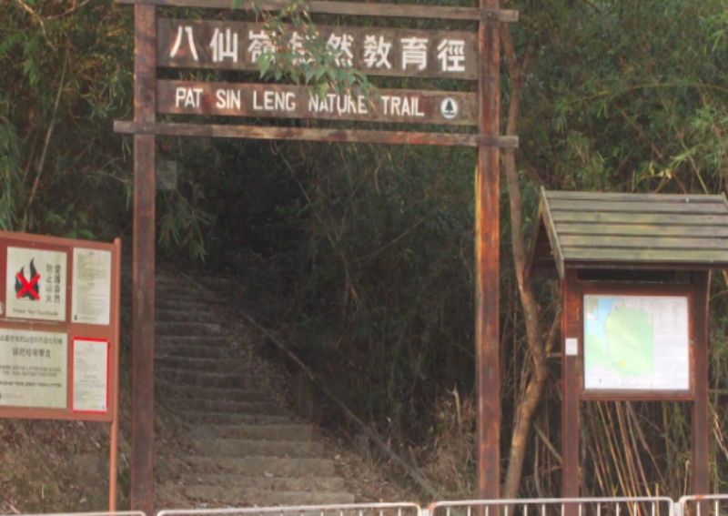 About 10 hikers suffer bee attack on popular Hong Kong hiking trail