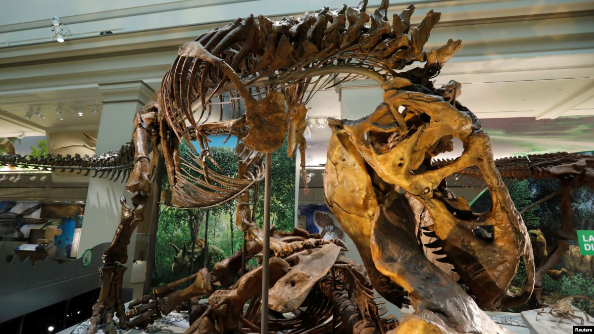 Study Provides New Details about Teenage T. Rex