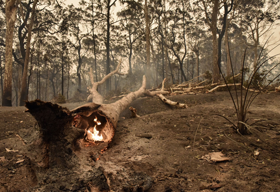 Malaysia stands by Australia in wildfire efforts, says MITI