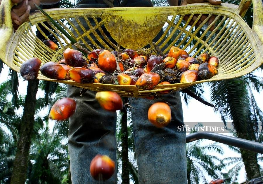 India asks domestic refiners to avoid buying Malaysian palm oil
