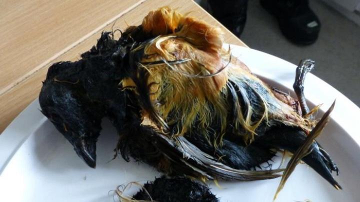比鲱鱼罐头还臭的美食,爱斯基摩人把它当宝,中国吃货只能说佩服