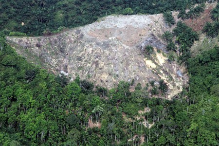 Plant development in Aceh's Leuser ecosystem may be scrapped after court ruling