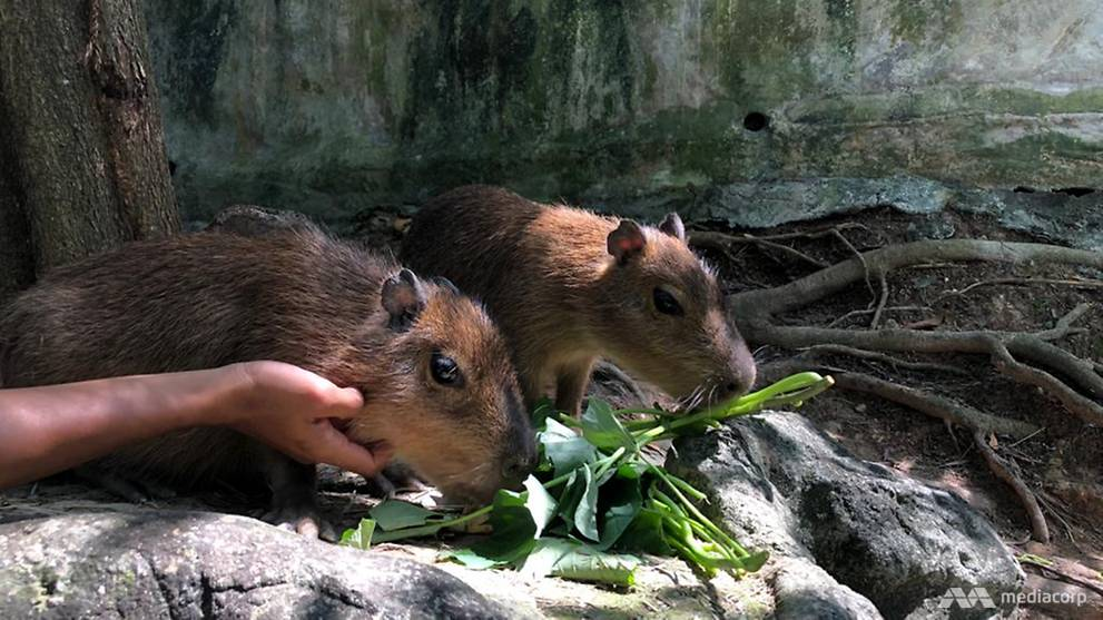 Cute and harmless: Exotic rodents charm visitors in Selangor petting zoo this CNY