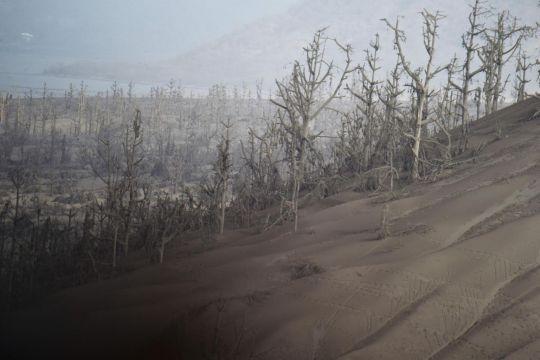 Signs of life at 'no-man's land' around Philippine volcano