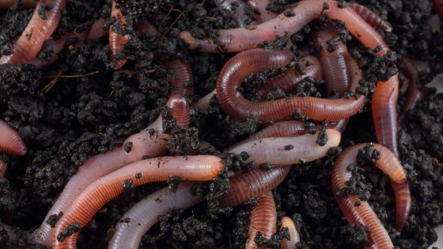 Scientists probe soil biodiversity's effect on crops and carbon