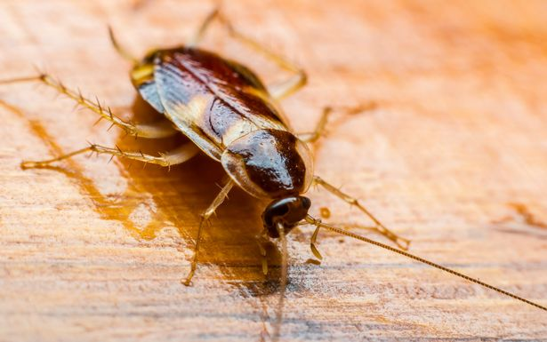 You can name a cockroach after your ex to celebrate Valentine's Day