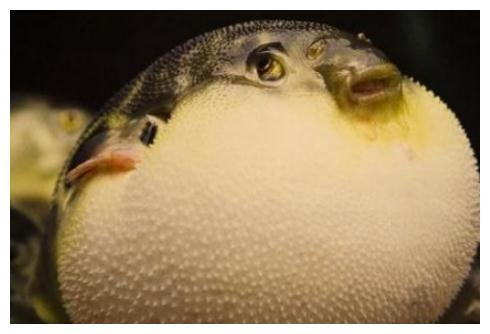 """中国游客去日本吃""""河豚"""",一口气点50只,结账时却成了哑巴!"""