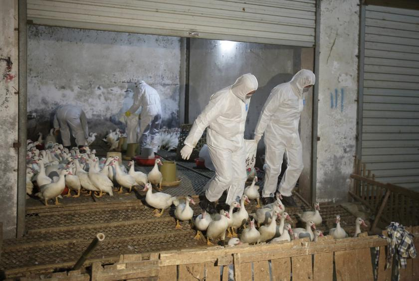H5N1: No import of live animals, products from Shaoyang, says Veterinary D-G