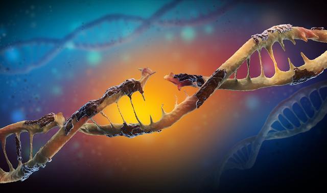 人类在基因上是否有灭绝的危险?