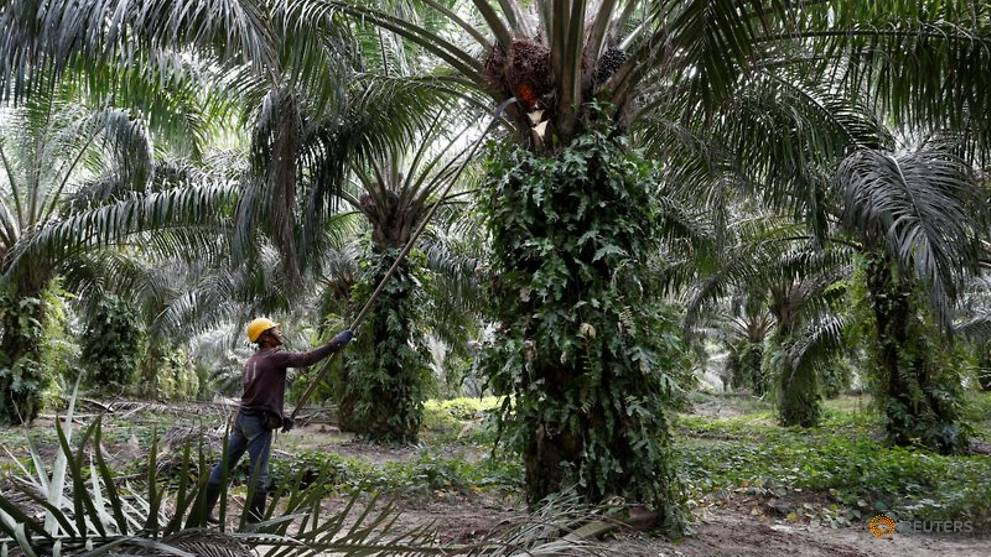 Pakistan pledges to buy more Malaysian palm oil to compensate for India's withdrawal